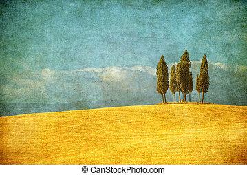 paesaggio, toscana, vendemmia, immagine, italia, tipico