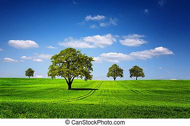 paesaggio verde, natura