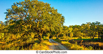 paese, foderare, quercia, strada, albero