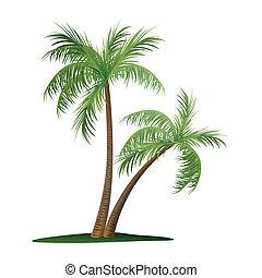 palma, due, albero