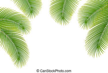 palma, foglie, fondo., bianco