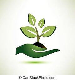 palma, pianta, concetto, simbolo ecologia