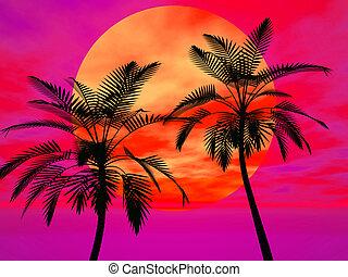 palma, sole, albero