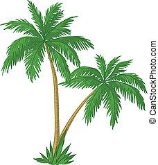palmizi