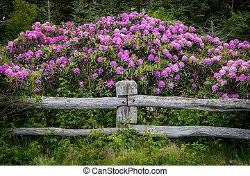 palo, rododendro, sopra, recinto, fiori