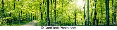 panorama, foresta verde, paesaggio
