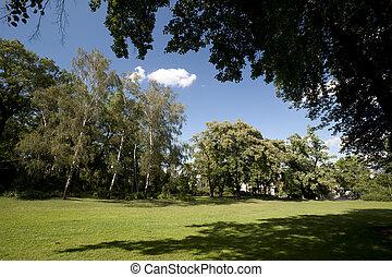 parco, albero