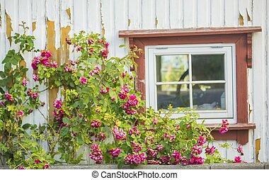 parete, finestra, fiori, bianco
