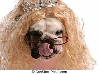 parrucca, vestito, -, su, cane, guastato, biondo, tiara