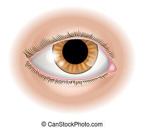 parte corpo, occhio, illustrazione