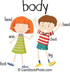 parti corpo, umano, diagramma