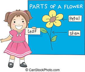 parti, fiore