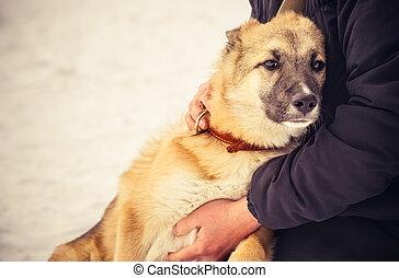 pastore, concetto, stile di vita, cane, abbracciare, esterno, donna, cucciolo, amicizia