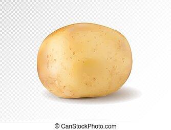 patata, realistico, vettore, illustrazione, 3d