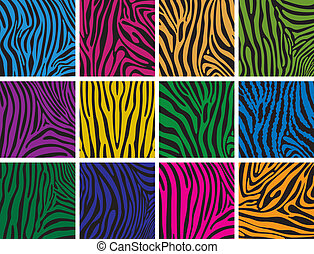 pelle, colorito, tessiture, set, zebra, vettore