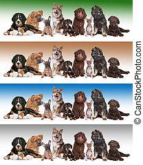 pendenza, sfondi, diverso, gruppo, cuccioli
