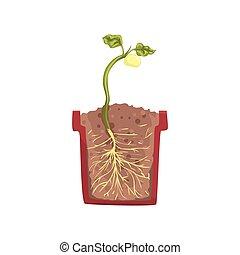 pentola pianta, croce, suolo, fagiolo, vettore, verde, illustrazione, crescente, crescita, suolo, seme, sezione, palcoscenico