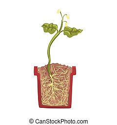 pentola pianta, croce, suolo, vettore, verde, illustrazione, crescente, crescita, suolo, sezione, palcoscenico