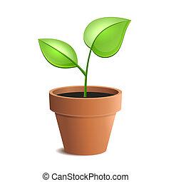 pentola pianta, giovane, isolato, vettore, verde, backgrounds., bianco