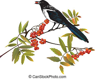 perching, uccello, ramo, gazza