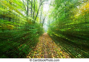 percorso, foresta, sfuocature