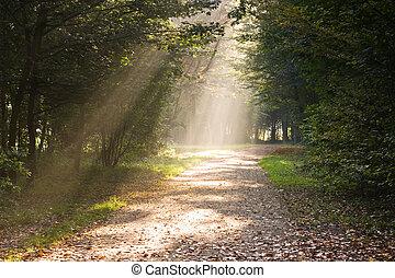 percorso, raggi, luce sole