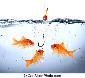 pericolo, pesce rosso
