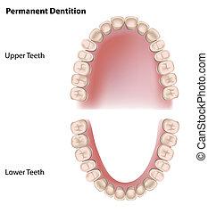 permanente, denti, eps8