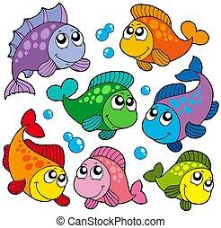 pesci, carino, 2, vario, collezione