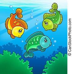 pesci, carino, acqua dolce, tre