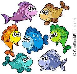 pesci, carino, vario, collezione