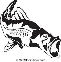 pesci grandi, predatore