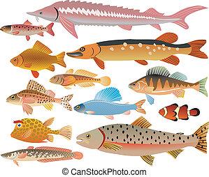 pesci, set