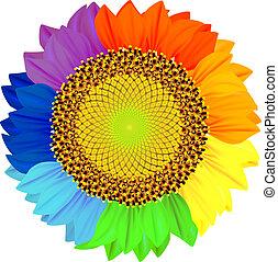 petali, differente, rainbow., colori, girasole