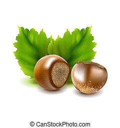 photo-realistic, illustration., nocciole, leaves., vettore, filberts