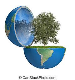 pianeta, dentro, albero