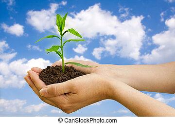 pianta, agriculture., mano