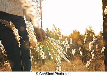 pianta, alto, foresta, spazio, secco, donna, testo