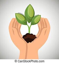 pianta, concetto, ecologico, verde, tenere mani