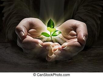 pianta, concetto, luce, mani