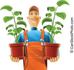 pianta, fioriera, giardiniere