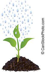 pianta, gocce, verde, giovane, pioggia