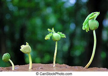 pianta, growth-baby, piante