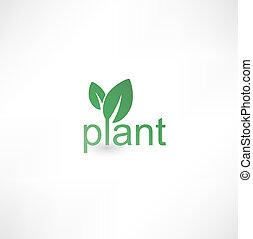 pianta, icona