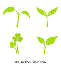 pianta, icone