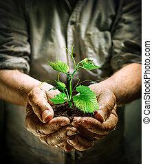 pianta, mani, verde, presa a terra, contadino