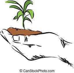 pianta, mano, illustrazione, appendere