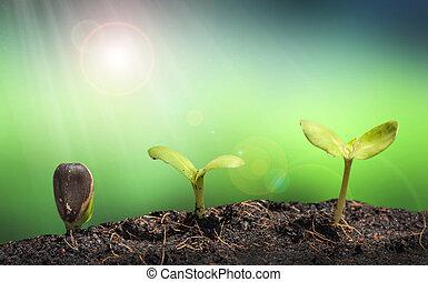 pianta, natura, suolo, bagliore, lente, mucchio, concep, piccolo, verde
