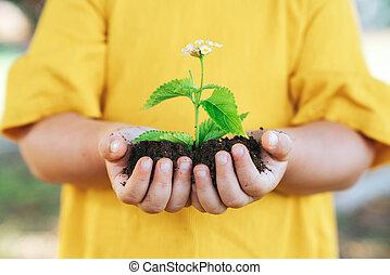pianta, poco, crescita, agricoltura, child., concept., mani
