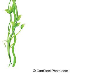 pianta, sfondo bianco